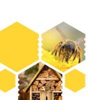 Méhbarát hálózat