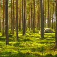 Egészségmegőrző erdőjárás
